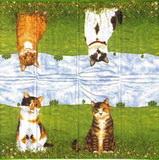 PK 017 - kapesníček 21x21 - kočičky