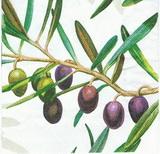 OL 042 Ambiente - ubrousek 33x33 - olivy velké