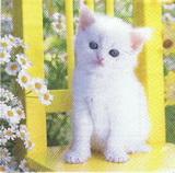 ZV 005 - ubrousek 33x33 - bílá kočička