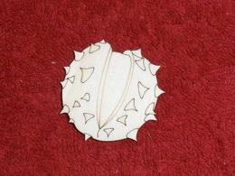TP3D0275 - 2D výřez plod kaštanu - 4,5x4,5cm - zvětšit obrázek