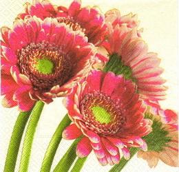 KV 422 - ubr.33x33-růž.gerbery v rohu - zvětšit obrázek