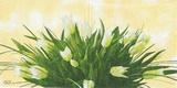 KV 033 - ubrousek 25x35 - tulipán svazek