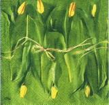 KV 065 - ubrousek 25x25 - tulipány na zeleném