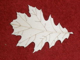 TP3D0277 - 2D výřez list javoru 1 - 9x6,5cm