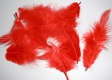 Peří dekorační červené  - 10-12ks