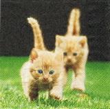 ZV 106 - ubrousek 33x33 - koťátka na trávě