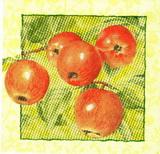 OZ 098- ubrousek 33x33 -jablíčko