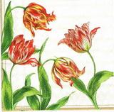 KV 441 AMBIENTE- ubr.33x33-tulipánky